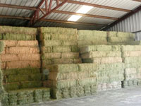 Bales of hay in the Hay USA hay barn